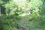 Foto Sierra Espuña 16